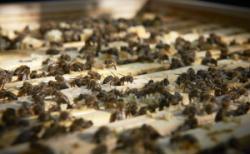 Bienen bei der Bahn