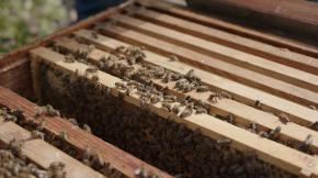 gleisgold1bc - Bienen bei der Bahn