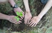 Magna sweets setzt auf Klimaneutralität