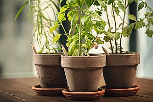 Sprout pencil in pot 18266 - Bleistifthaft innovativ